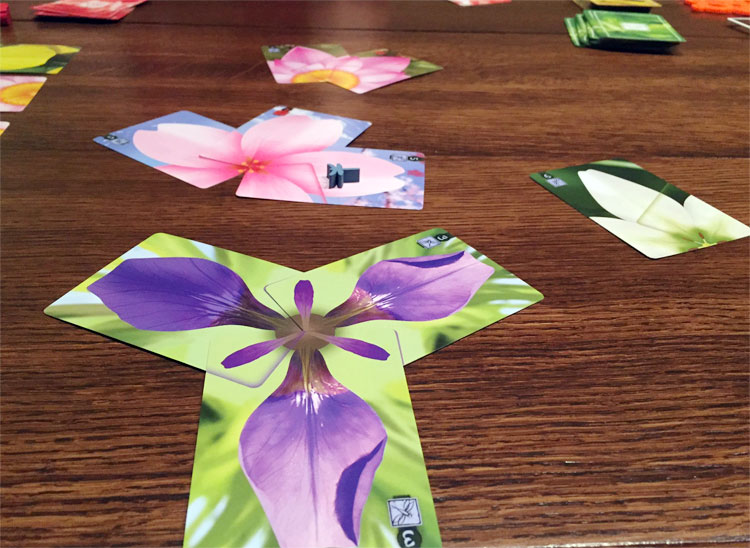 Lotus Game Experience
