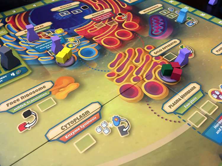 Cytosis Game Experience